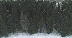 Luchtmening over het bos van de de winterspar Stock Foto