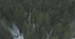 Luchtmening over het bos van de de winterspar Royalty-vrije Stock Fotografie