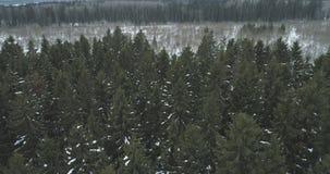 Luchtmening over het bos van de de winterspar Stock Fotografie