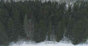 Luchtmening over het bos van de de winterspar Stock Afbeeldingen