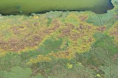 Luchtmening over het Deltamoerasland van Donau, Roemenië Stock Afbeelding