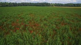 Luchtmening: Poppy Field Royalty-vrije Stock Foto