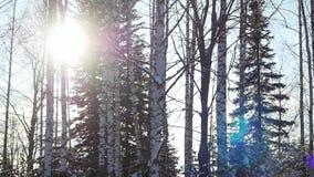 Luchtmening van auto het drijven langs de sneeuw mooie bergweg en de zon die door de bomen glanzen 1920x1080 stock videobeelden