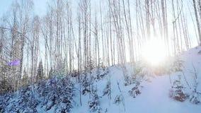 Luchtmening van auto het drijven langs de sneeuw mooie bergweg en de zon die door de bomen in langzame motie glanzen stock video