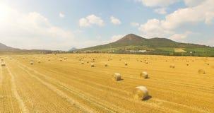 Luchtmening van bebouwd tarwegebied met balen van hooi in het platteland met een mooie mening van de berg op zonnig stock video
