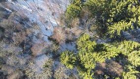 Luchtmening van berk en nette bomen in de winterbos stock footage