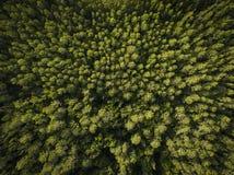Luchtmening van bomen royalty-vrije stock fotografie