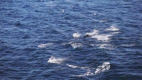 Luchtmening van boot van het springen dolfijnen in open zee stock videobeelden
