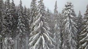 Luchtmening van de snow-covered sparren stock videobeelden