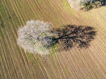 Luchtmening van een boom op een geploegd gebied, royalty-vrije stock foto