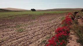 Luchtmening van een de landbouwgebied met rode papavers dichtbij Jaen stock video