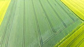 Luchtmening van gecultiveerd gebied - landelijke scène stock footage