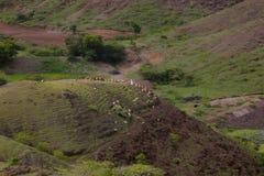Luchtmening van herder op heuvel met schapen Saswad royalty-vrije stock afbeeldingen