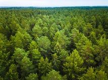 Luchtmening van het bos stock foto