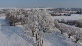 Luchtmening van het bos in de wintertijd stock footage