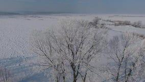 Luchtmening van het bos in de wintertijd stock video