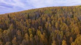 Luchtmening van het landschap van Alaska stock videobeelden
