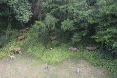 Luchtmening van het verbergen van plaats voor deers in het bos stock foto