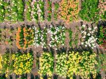 Luchtmening van kleurrijke bloemtuin Lucht Foto Royalty-vrije Stock Fotografie