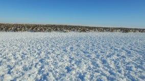 Luchtmening van kudde van rendier, die op sneeuw in toendra liep stock video