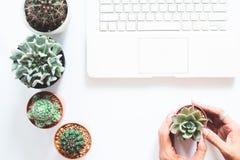 Luchtmening van laptop computer op wit bureau met cactus en succulent Stock Foto's