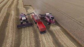 Luchtmening van moderne maaidorsentarwe op het gebied De maaimachine maakt korrel in vrachtwagen leeg stock videobeelden