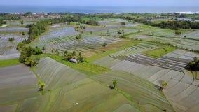 Luchtmening van padieveld in Bali stock videobeelden