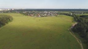 Luchtmening van tarwegebieden, weide, bos en dorp in landelijk Rusland stock videobeelden