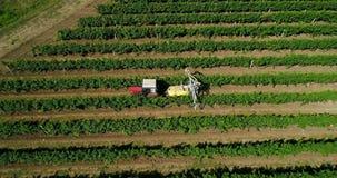 Luchtmening van tractor het oogsten druiven in een wijngaard Landbouwers bespuitende wijnstokken met tractor stock footage