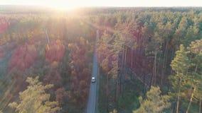 Luchtmening van uitstekende autoritten in bos in zonlicht stock video