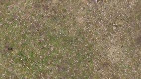 Luchtmening van vlieg omhoog boven droog gras stock video