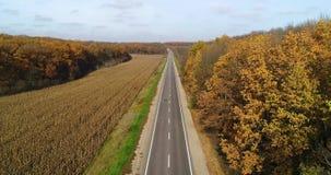 Luchtmening van weg in de herfstbos bij zonsondergang Verbazend landschap met landelijke weg, bomen met rode en oranje bladeren i stock video