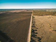 Luchtmening van wijngaard in Kingston op Murray in de winter Royalty-vrije Stock Afbeeldingen
