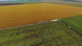 Luchtmening van zonnebloemgebied, menings bloeiende zonnebloemen stock footage