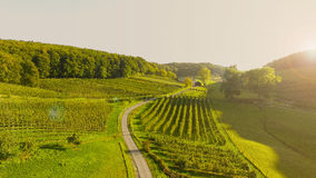 Luchtmening: Wijngaardlandschap - Zonsopgang Stock Afbeeldingen