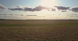 Luchtmotie boven tarwegebieden onder blauwe hemel met wolken stock videobeelden