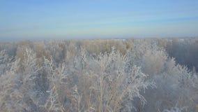 Luchtonderzoek van de winterbos stock video