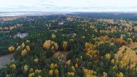 Luchtpanorama altijdgroen en gouden vergankelijk bos stock videobeelden