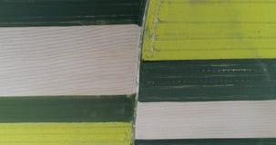 Luchtschot die van gebied gele wit tonen en gekleurd groen geplant in rechte rijen stock footage