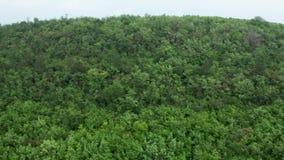 Luchtschot van een mooi dicht gemengd boombos stock video