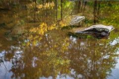 Luchtspiegeling in het water Stock Afbeelding