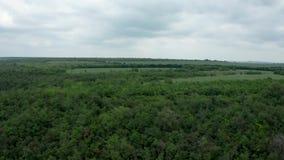 Luchtspruit in een bewolkte dag over een dicht bos stock video