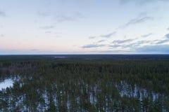 Luchtstijgenvlucht over het bos van de de winterpijnboom in donkere avond na zonsondergang Royalty-vrije Stock Fotografie
