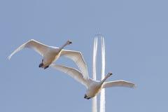 Luchtverkeer Stock Foto's
