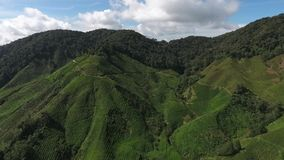 Luchtvideo van Cameron Highland stock footage