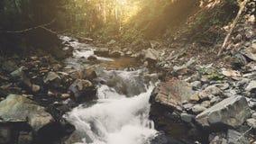 Luchtvlucht: bergrivier in de herfstbos stock footage