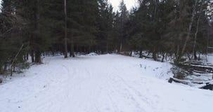 Luchtvlucht in het bos van de de winterspar in schemer Royalty-vrije Stock Afbeelding