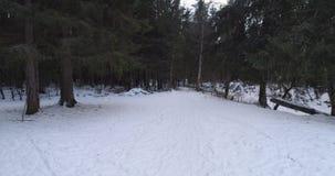 Luchtvlucht in het bos van de de winterspar in schemer Stock Fotografie