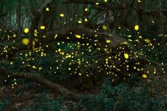 Luciérnagas en el verano en el bosque de hadas Imagen de archivo