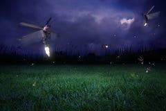 Luciérnagas en la noche Fotos de archivo libres de regalías